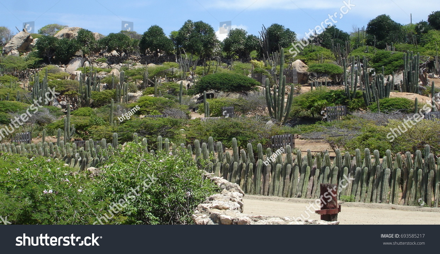 Cactus Garden On A Hill