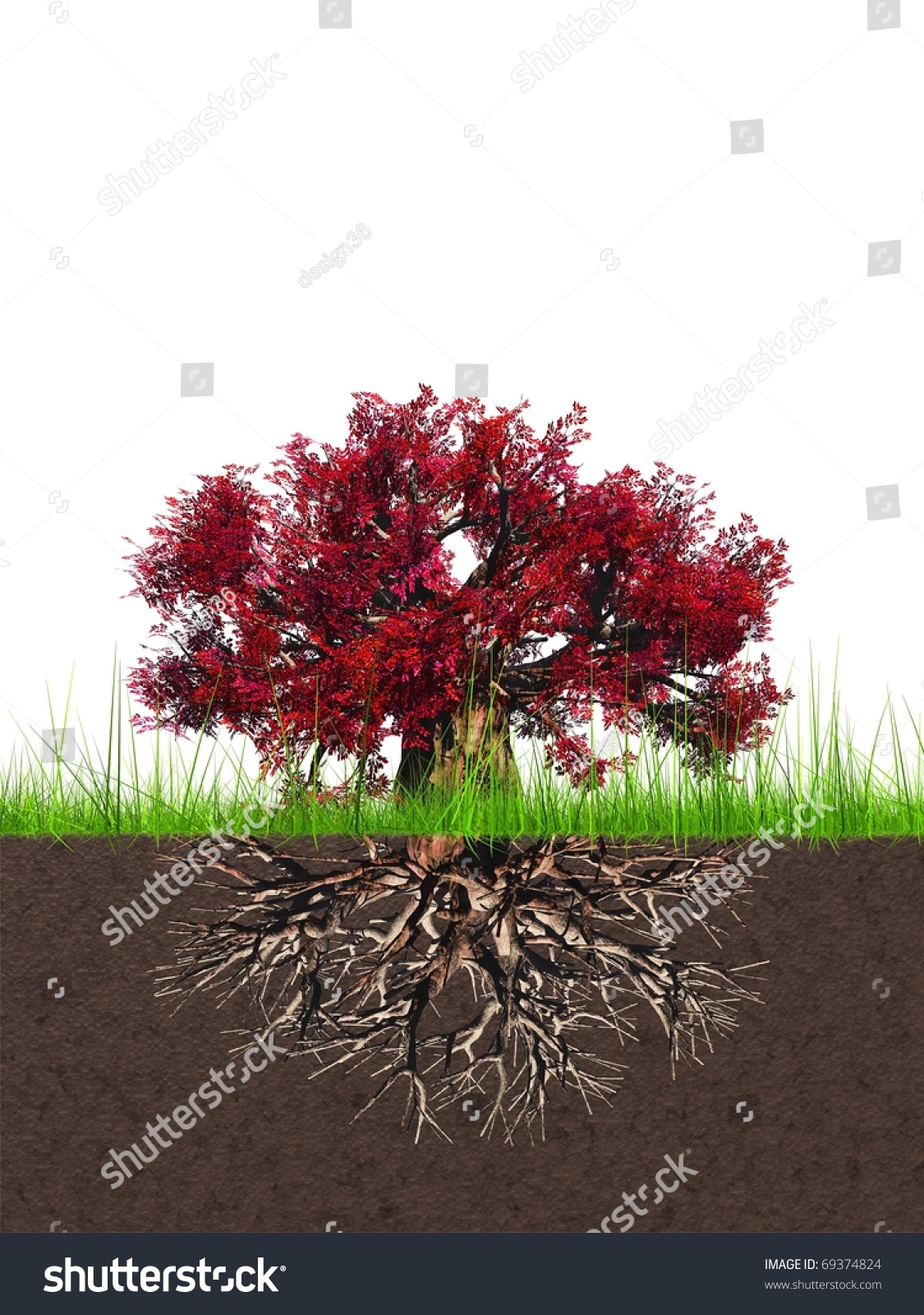 Deep Roots In Native Youth: High Resolution Conceptual Tree With Deep Roots Stock