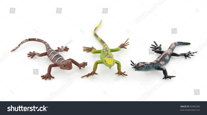 salamander white background - photo #17