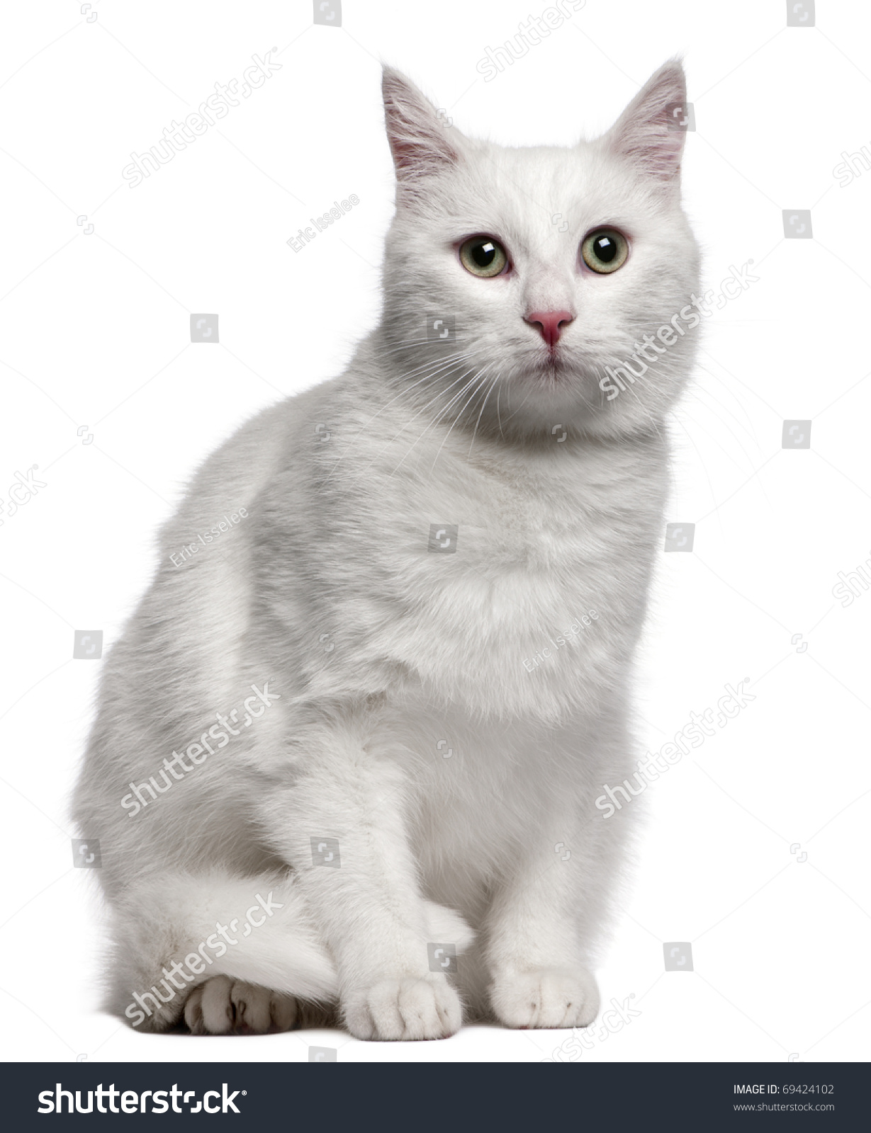 Mixedbreed Cat 1 Year Old Sitting Stock Shutterstock