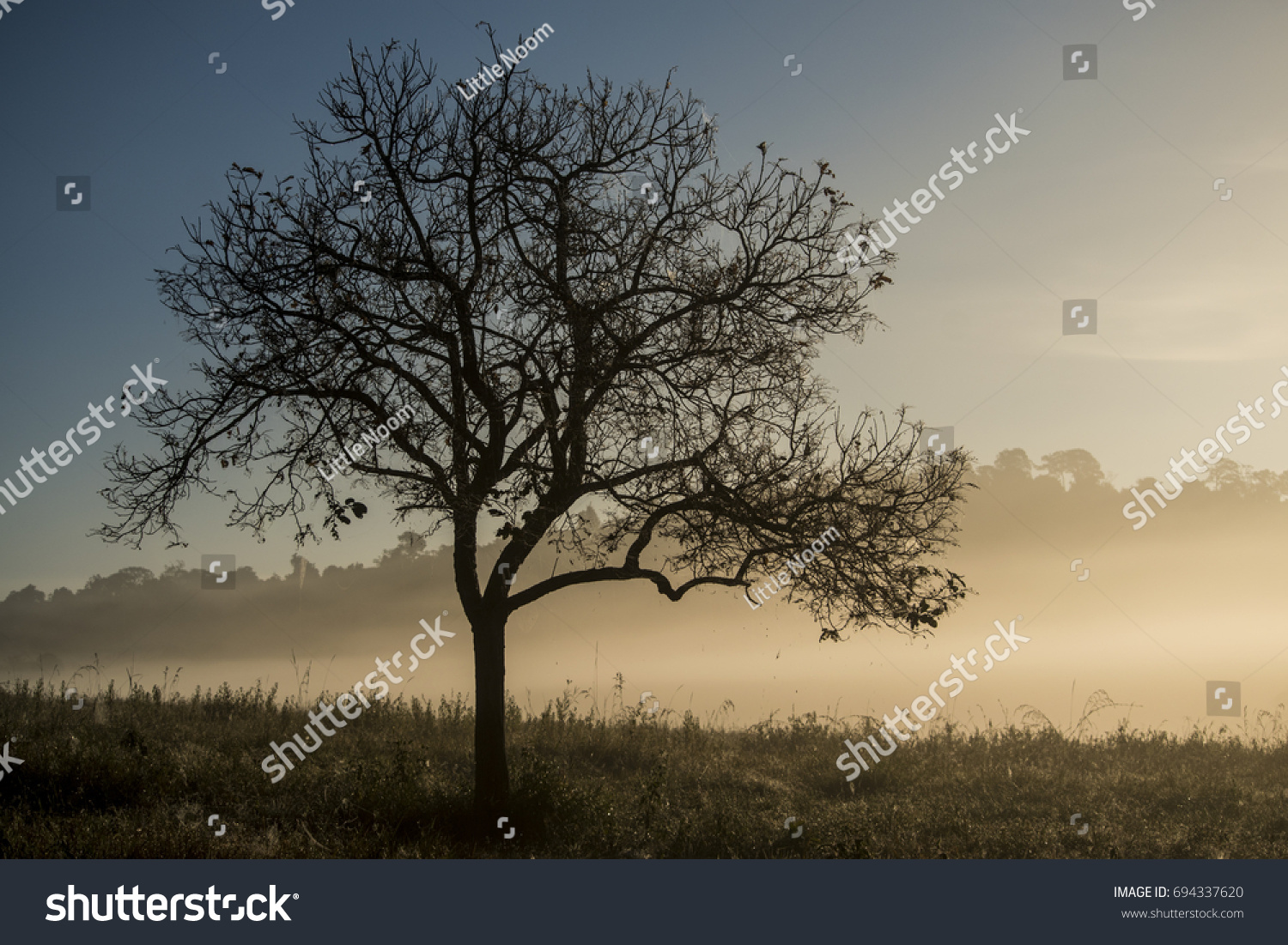 Silhouette Tree With morning light #694337620