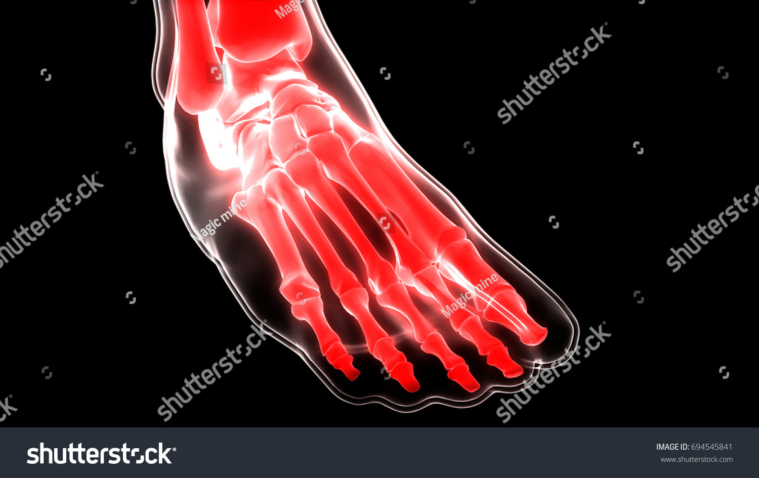 Human Skeleton Foot Joints Anatomy 3 D Stock Illustration 694545841