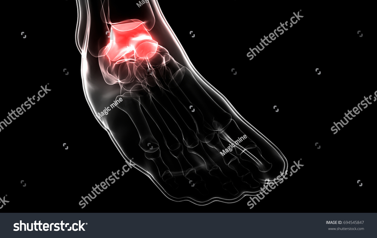 Human Skeleton Foot Joints Anatomy Talus Stock Illustration ...