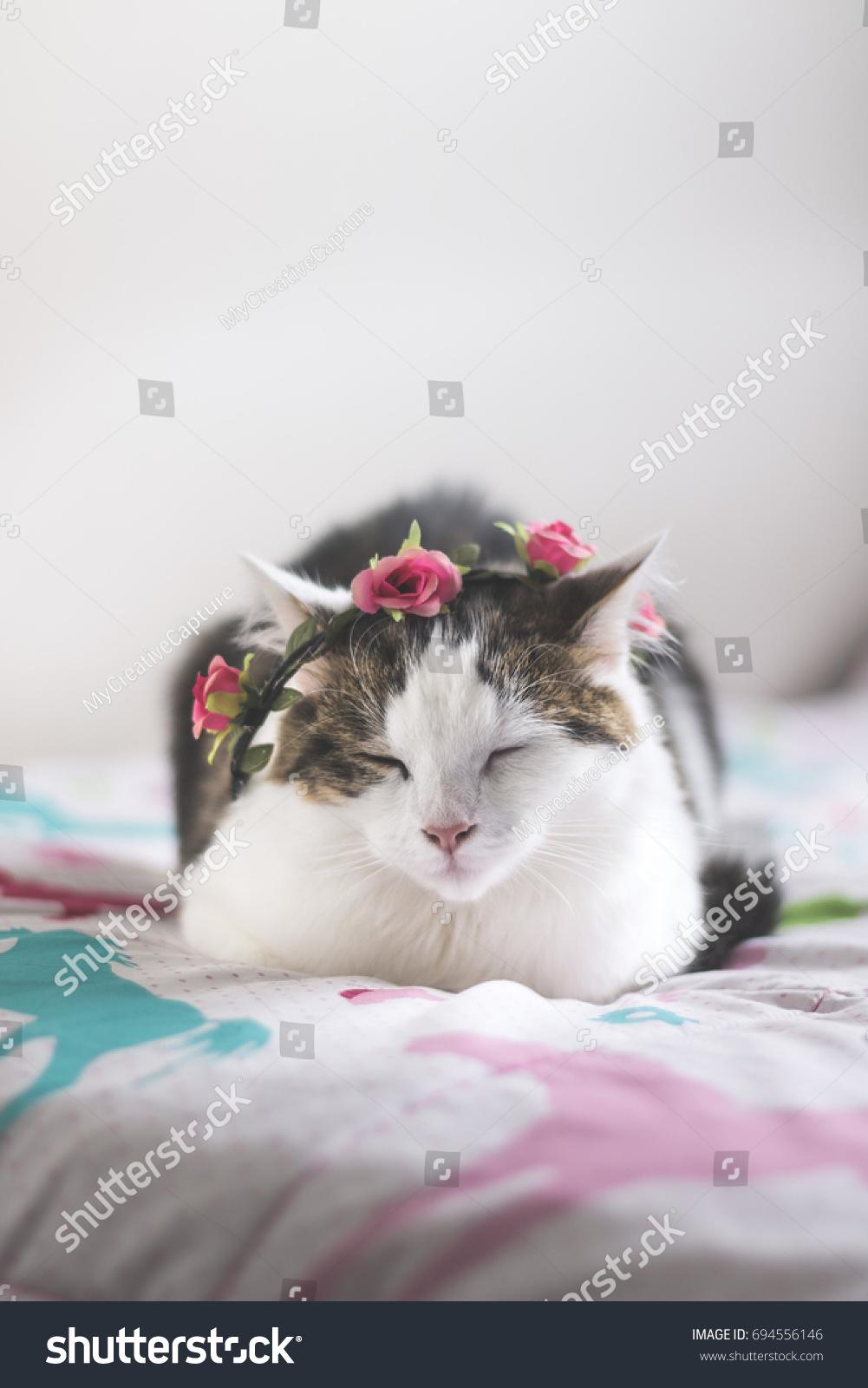 Sleeping Cat Wearing Flowercrown Stock Photo Edit Now 694556146