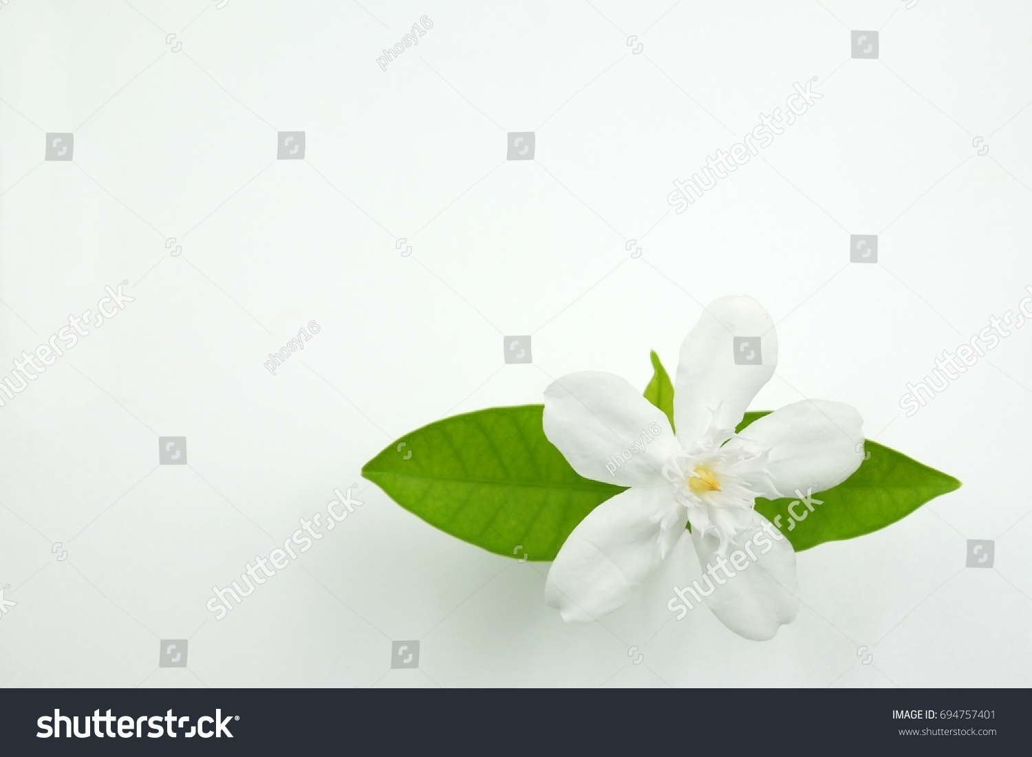 background of gardenia