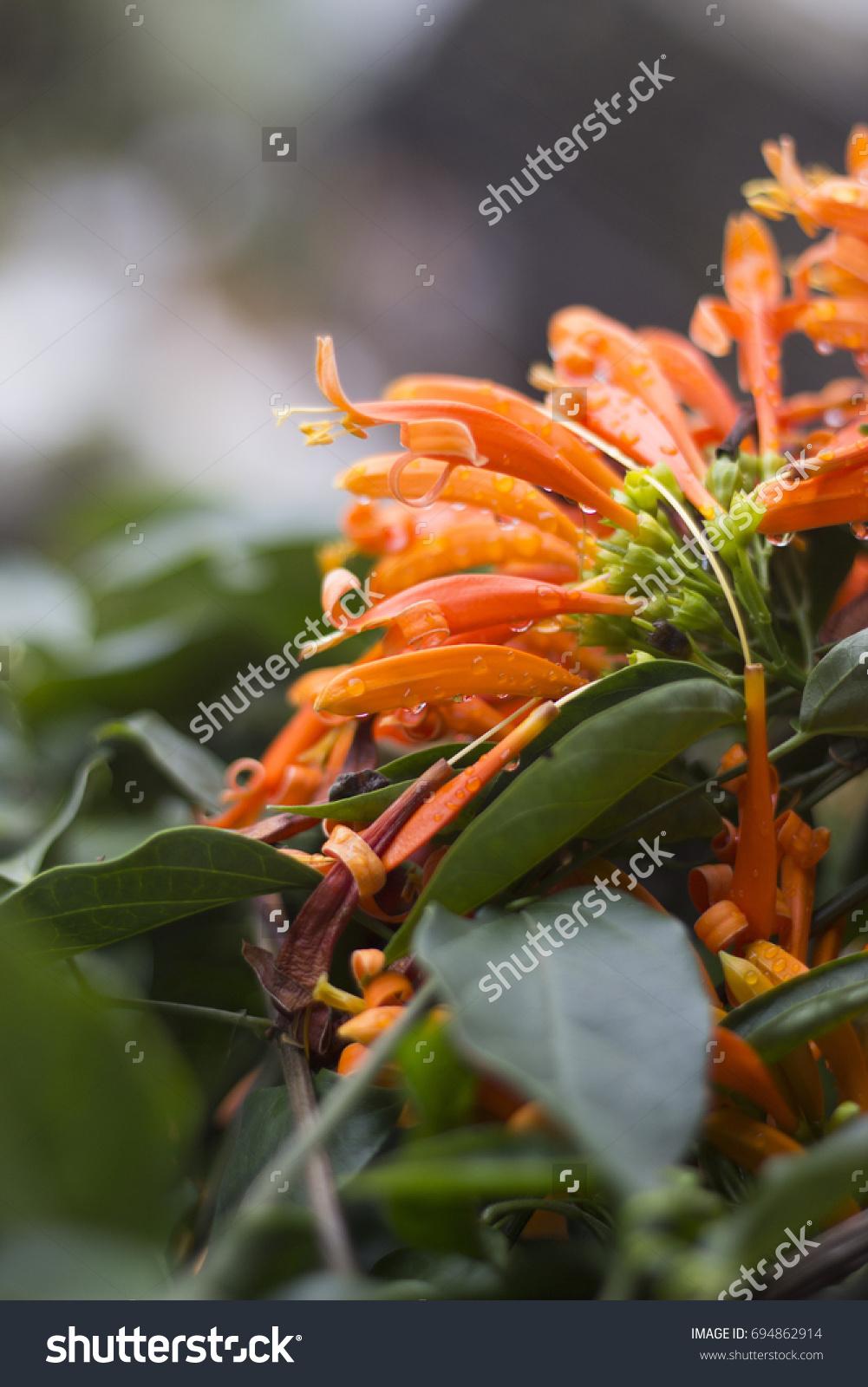 Orange Beautiful Flowers With Raindrops On A Rainy Day Ez Canvas