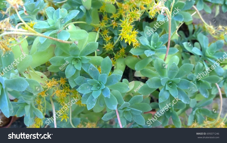 Plants Yellow Flowers Stock Photo Edit Now 695071246 Shutterstock