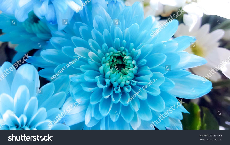 Beautiful Light Blue Aster Flower Soft Stock Photo Edit Now
