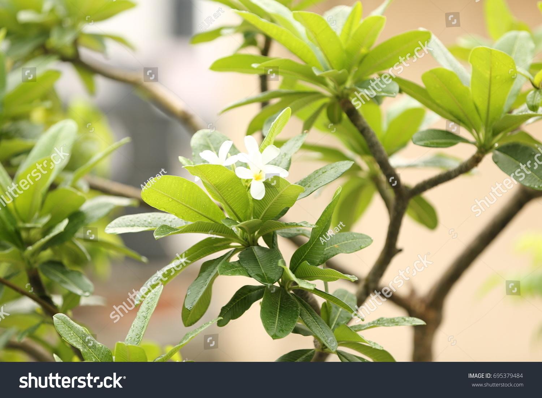 Lush Green Plants Fresh Beautiful White Stock Photo Edit Now