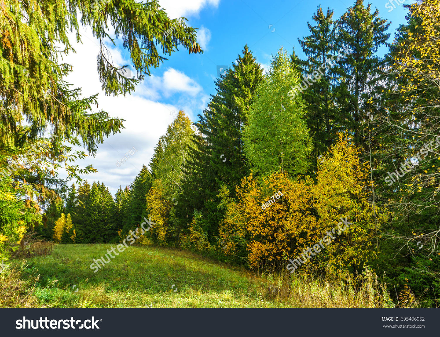 Bright Foliage On Trees Autumn Forest Stock Photo (100% Legal ...