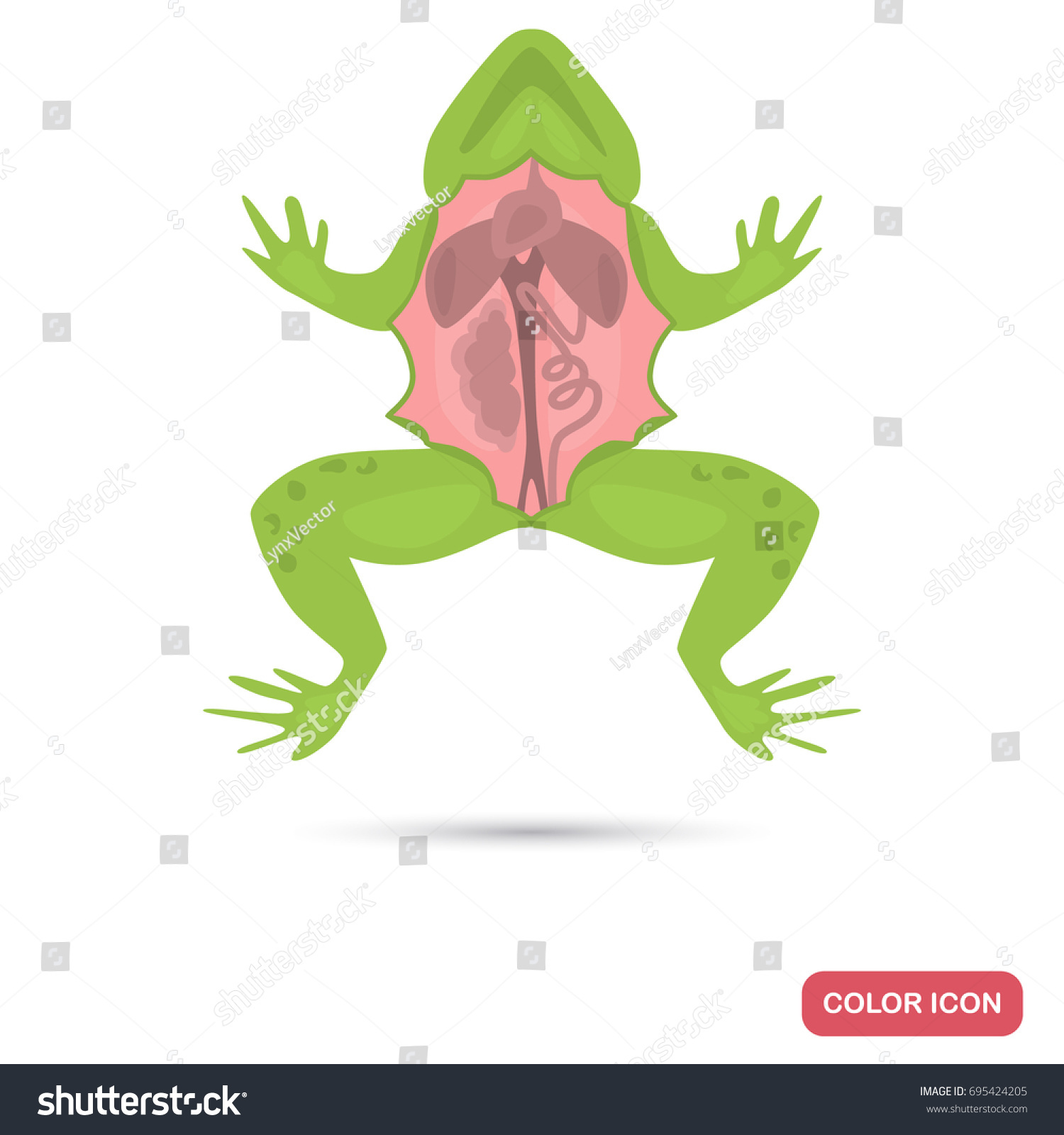 dissected frog color flat icon web stock vector 695424205