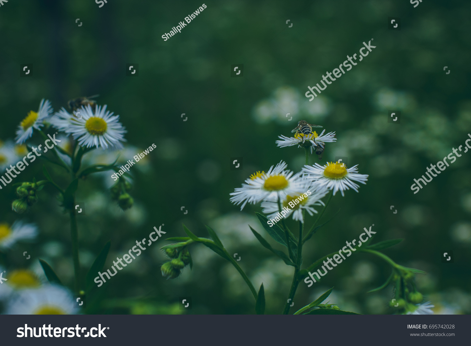 Shot beautiful wild flowers growing forest stock photo edit now shot of beautiful wild flowers growing in the forest areas of himachal pradesh india izmirmasajfo