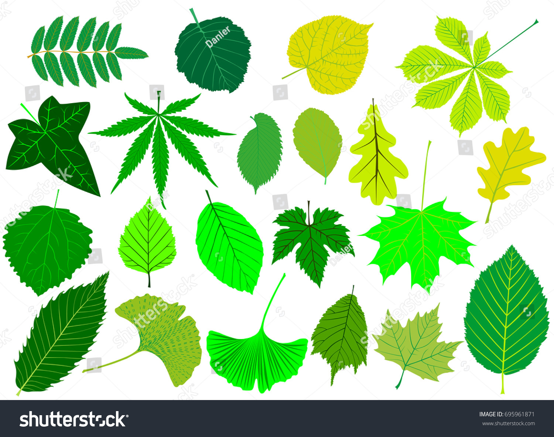 tree leaves green setsilhouettes leaf stock vector 695961871