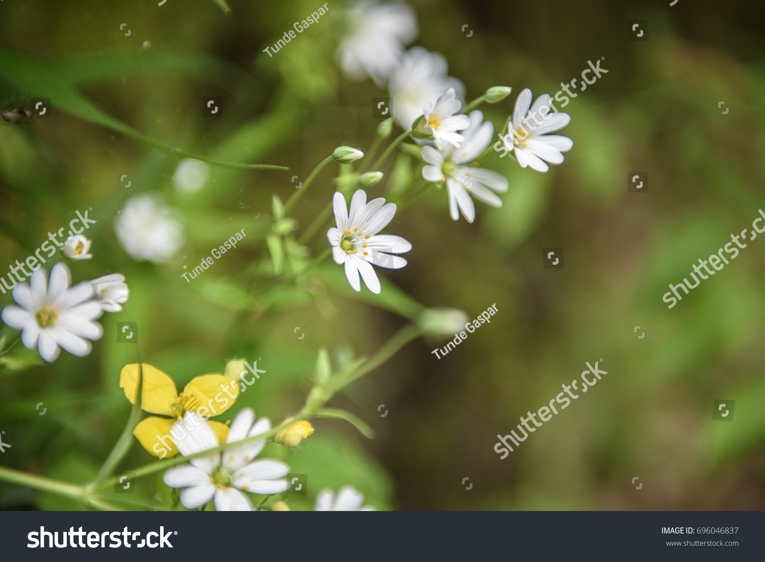 Close up photo with shallow depth of field of beautiful natural ...