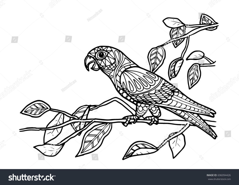 coloring page book parrot bird color - Bird Coloring Book