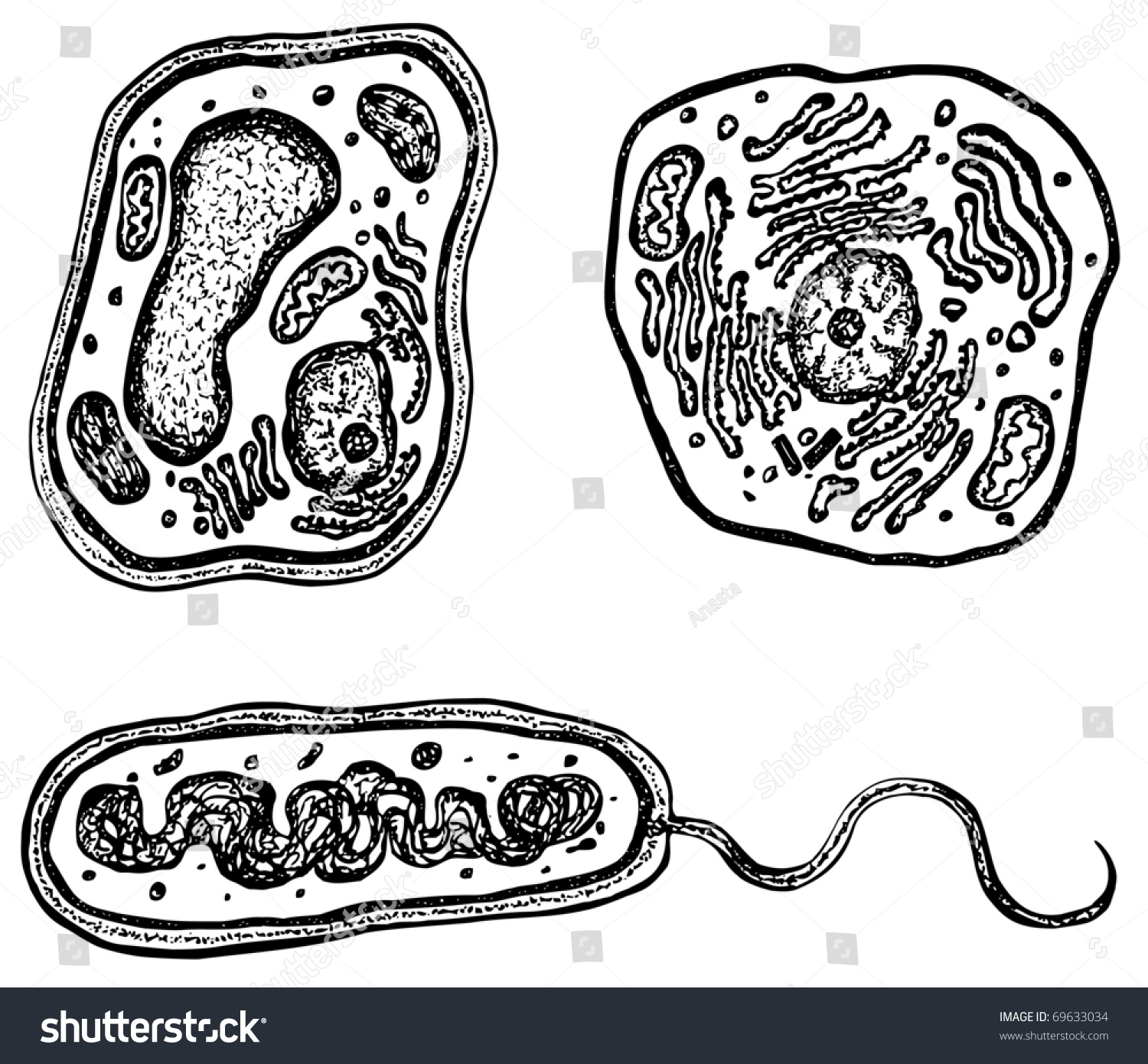 Plant Animal Bacteria Cells Organelles Each Stock Vector Royalty Prokaryotic Vs Eukaryotic Tattoo Pictures And With Cell On Its Own Layer