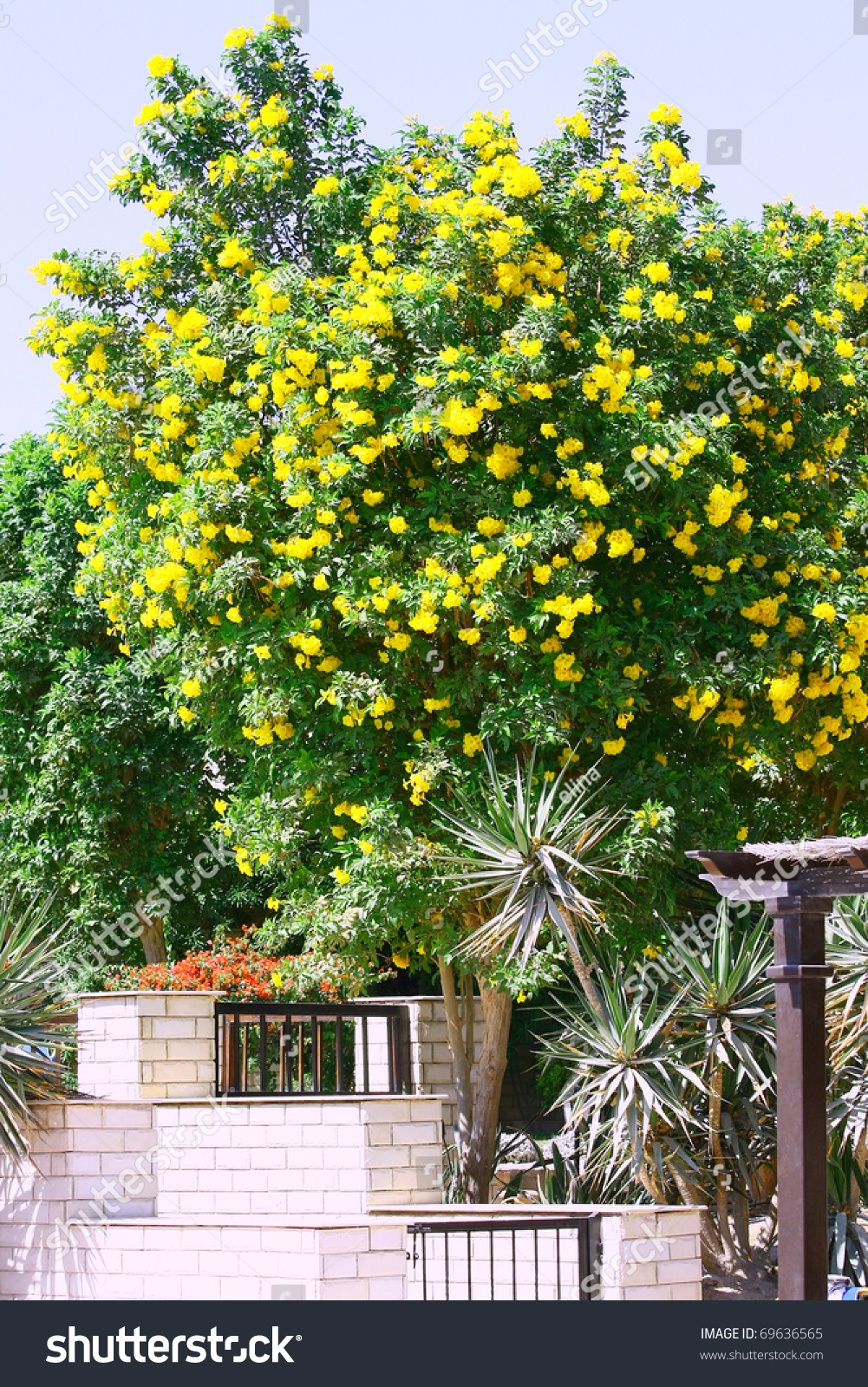 Tree yellow flowers tropical garden stock photo download now tree with yellow flowers in a tropical garden mightylinksfo