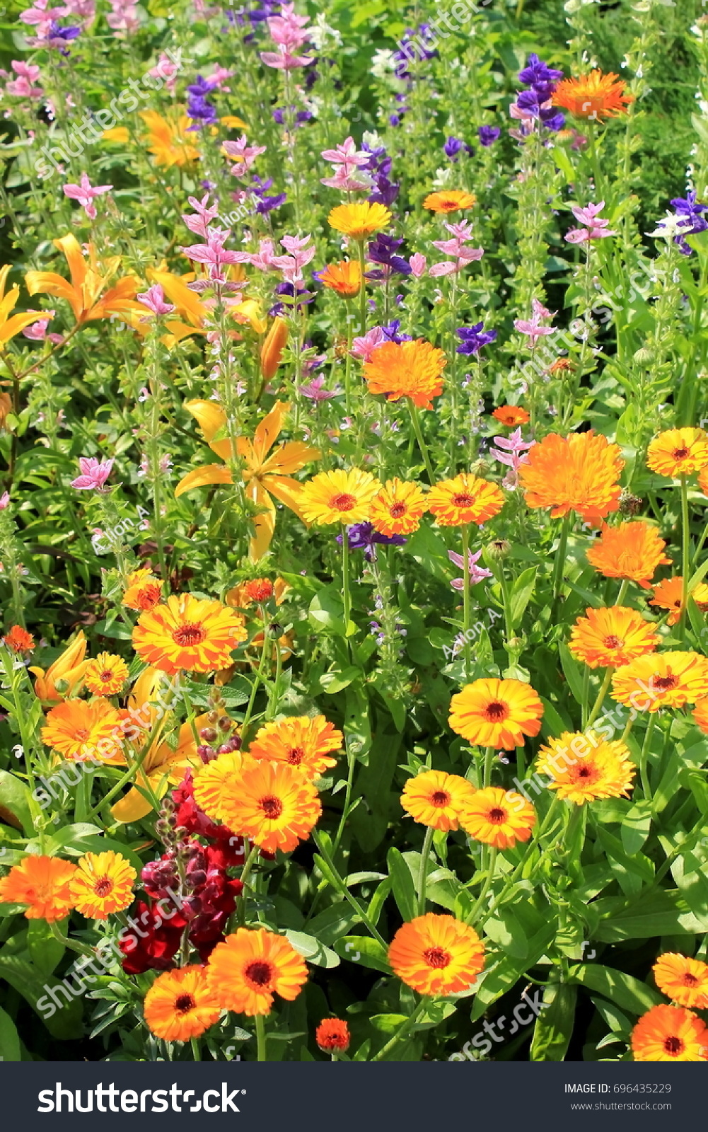 Beautiful natural background bright yellow flowers stock photo beautiful natural background with bright yellow flowers different wild flowers mightylinksfo