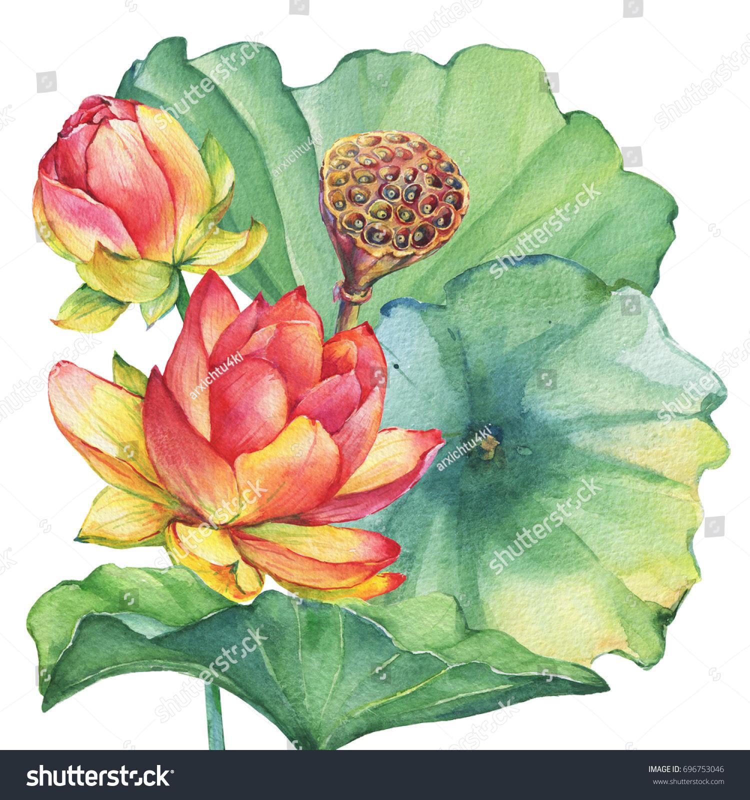 Poster arrangement pink indian lotus flower stock illustration poster arrangement of pink indian lotus flower with leaves seed head bud mightylinksfo