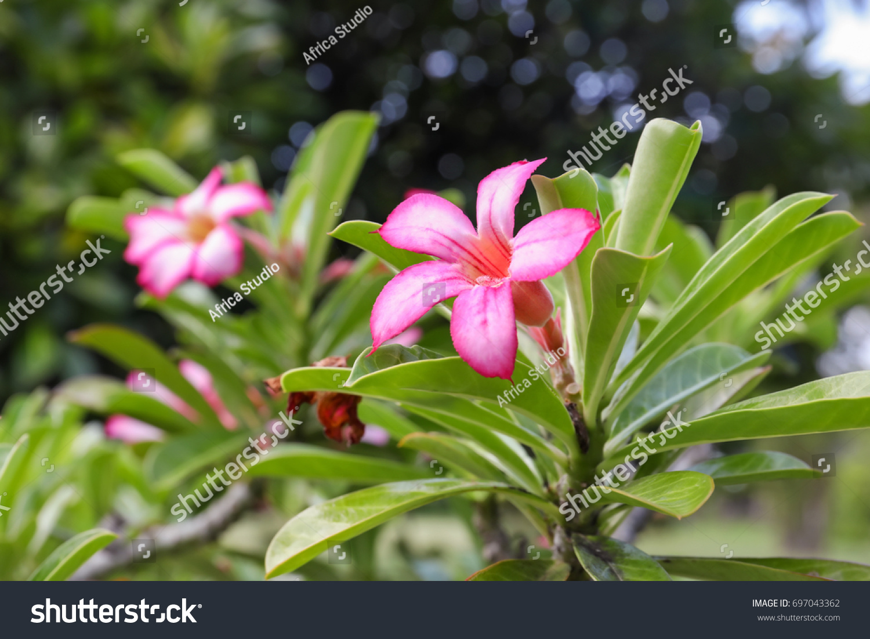 Beautiful tropical flowers outdoors ez canvas id 697043362 izmirmasajfo