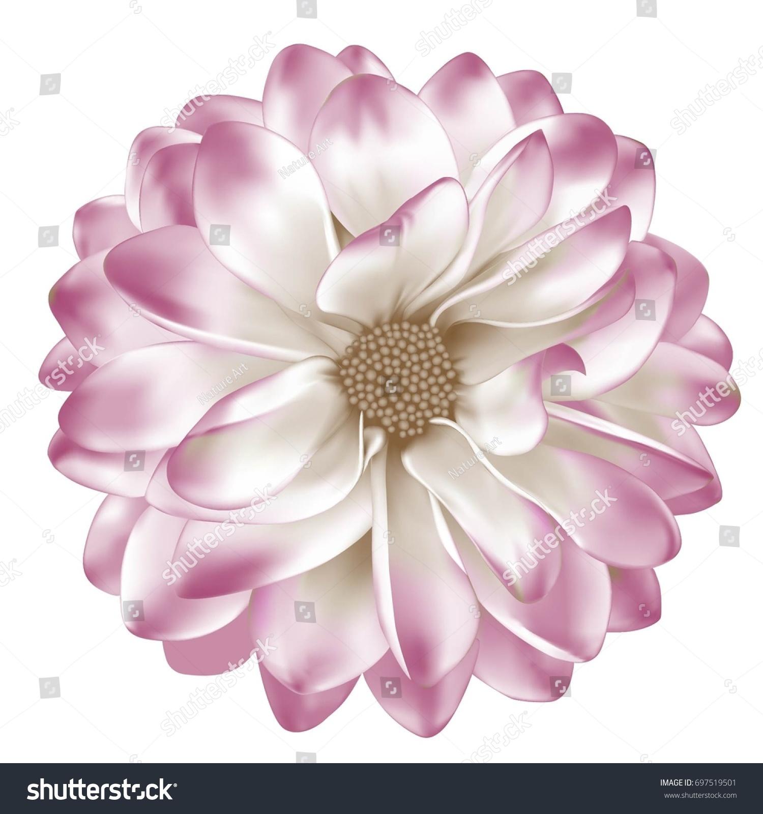 White Red Mona Lisa Flower Dahlia Stock Vector Royalty Free