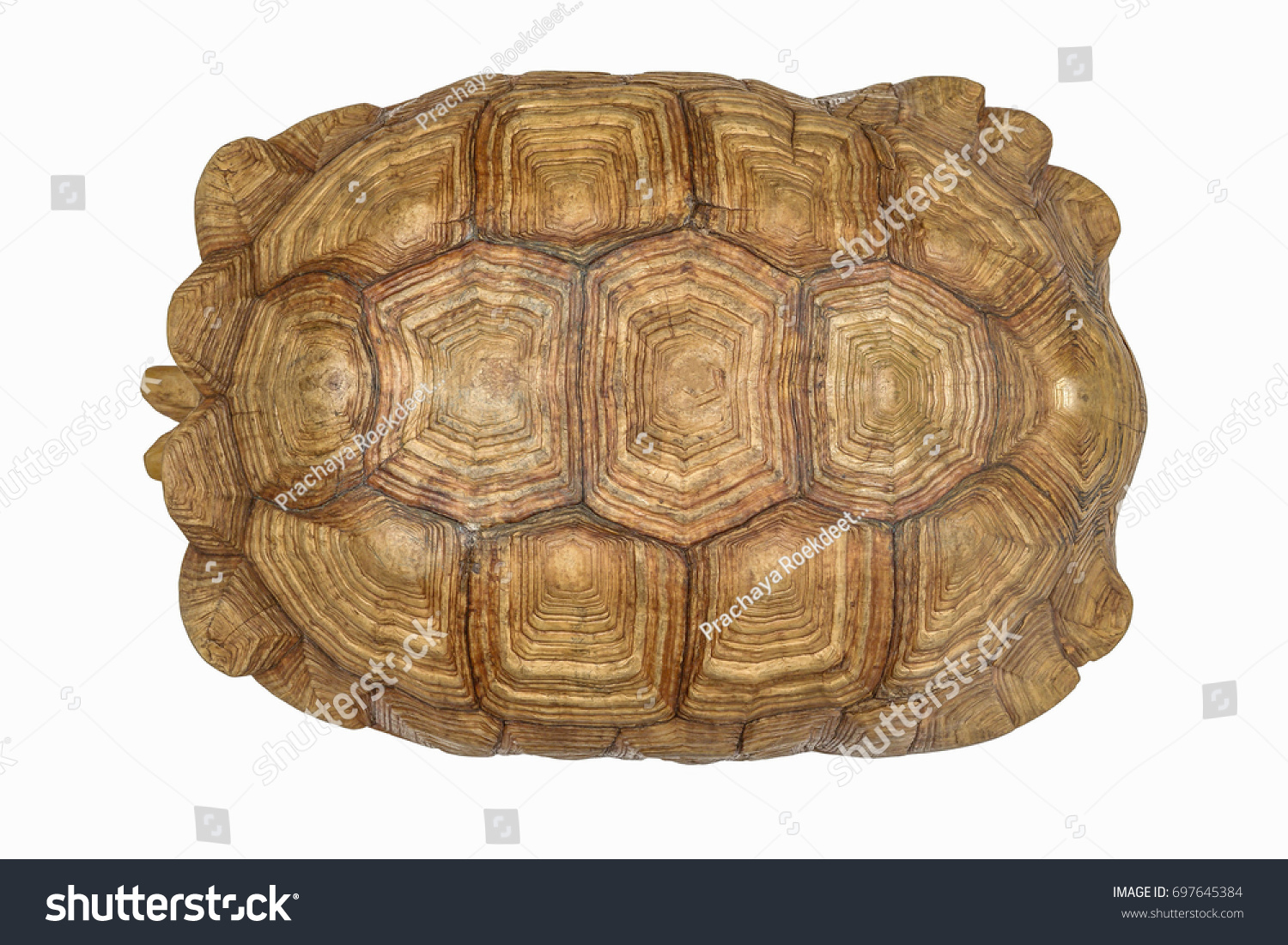 giant tortoise shell texture turtle carapace stock photo 697645384 shutterstock. Black Bedroom Furniture Sets. Home Design Ideas