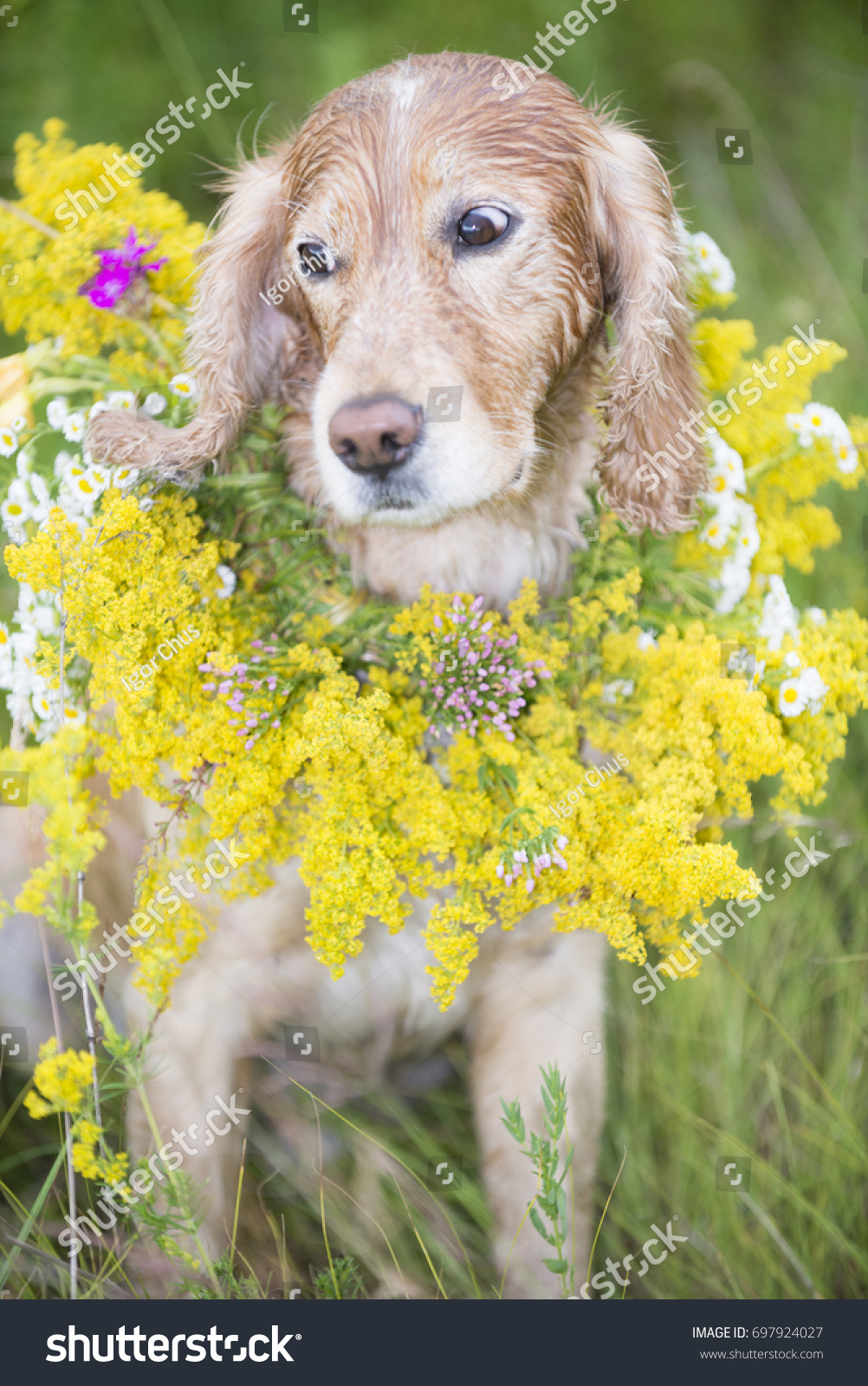 Dog Bouquet Flowers Stock Photo Royalty Free 697924027 Shutterstock