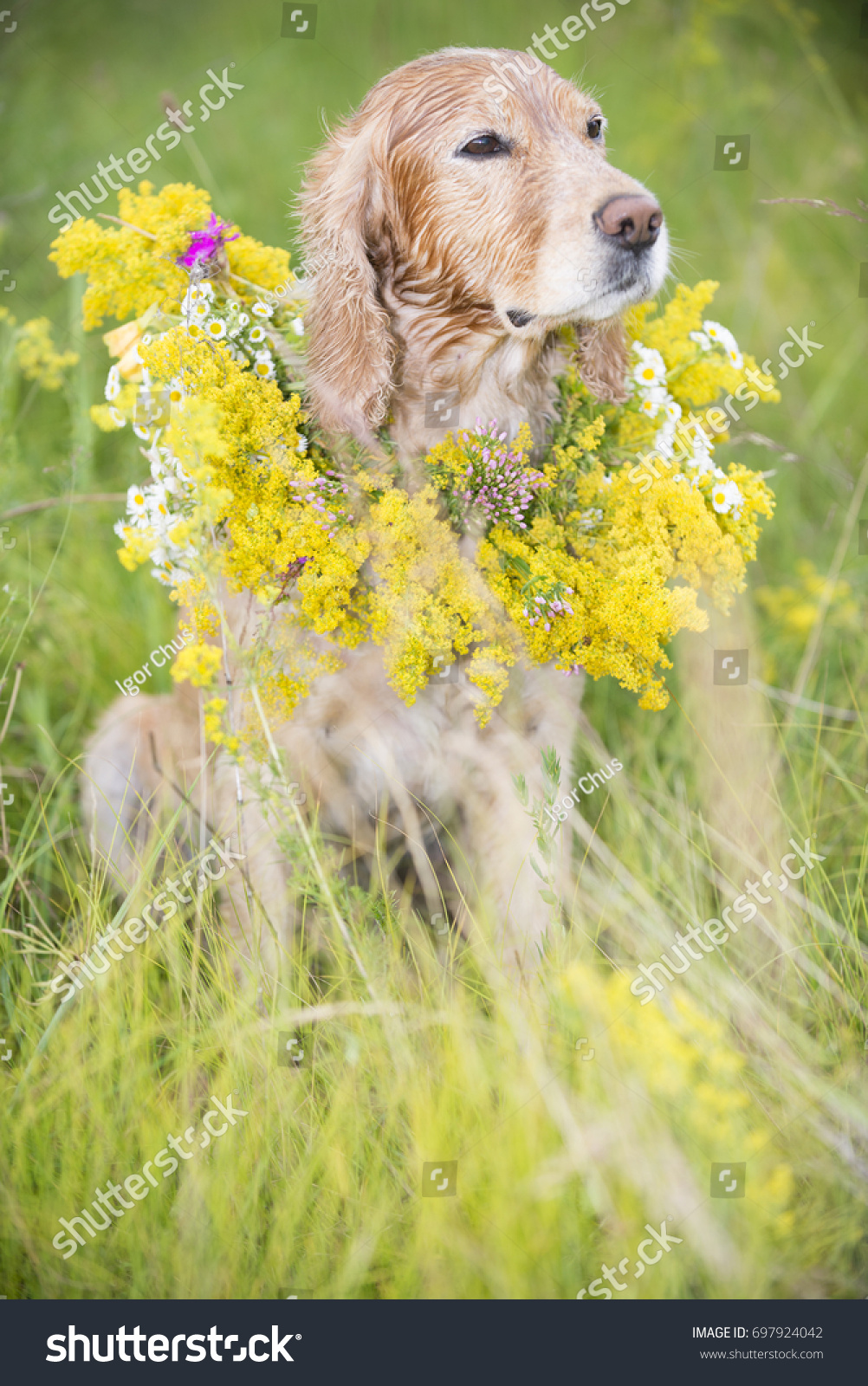 Dog Bouquet Flowers Stock Photo (Royalty Free) 697924042 - Shutterstock