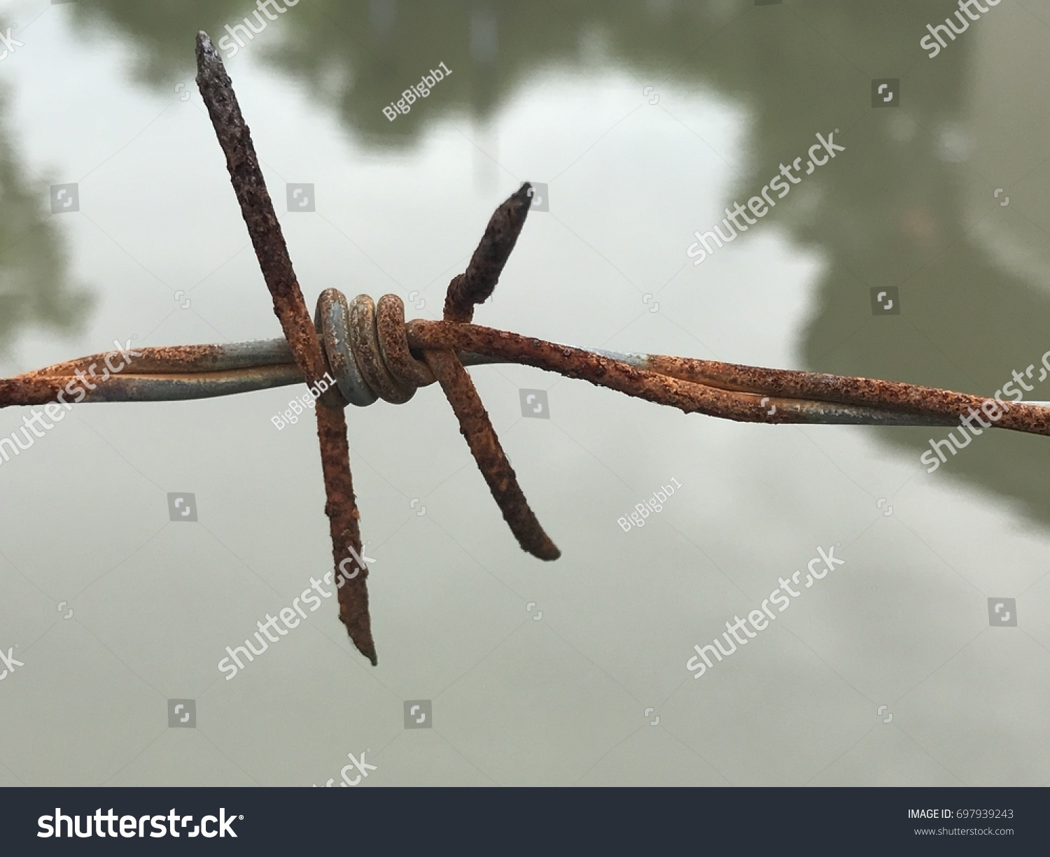Rusted Barbed Wire Stock Photo (Edit Now)- Shutterstock