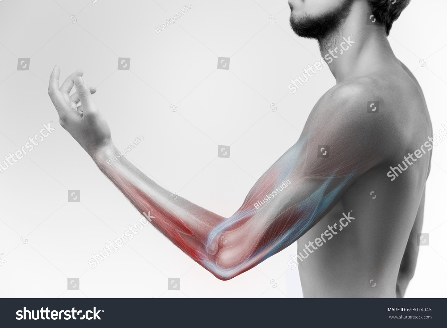Human Arm Musculature Anatomy Human Arm Stock Photo Edit Now