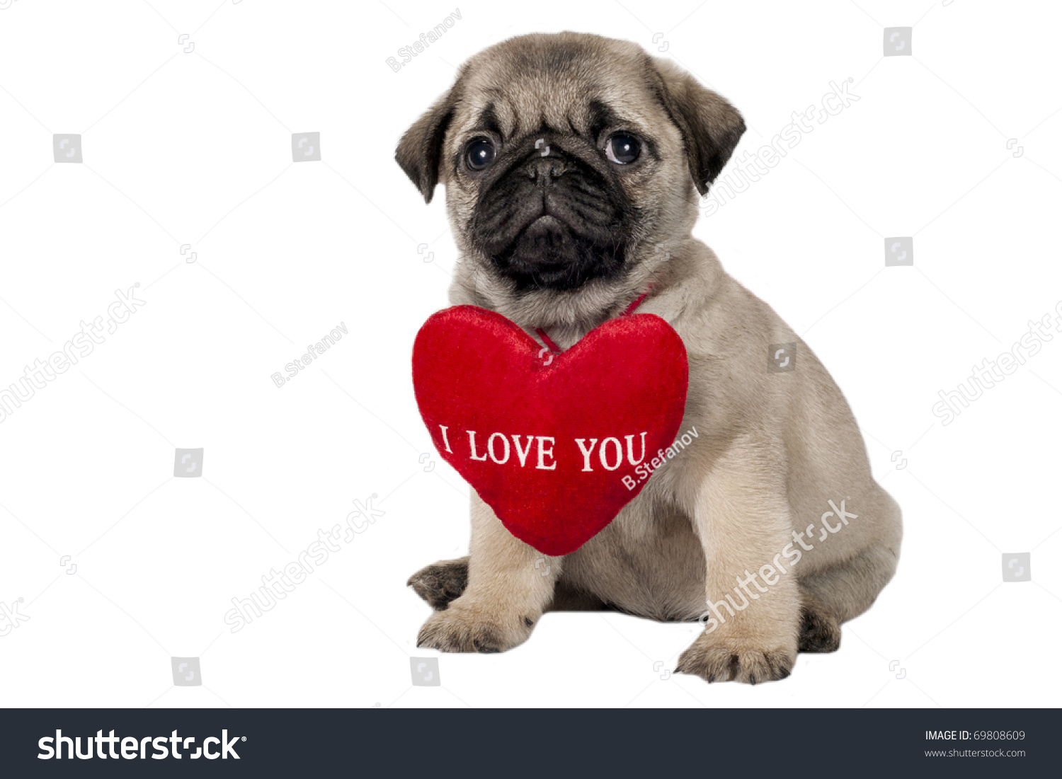 pug says i love you i love you pug gallery 5165