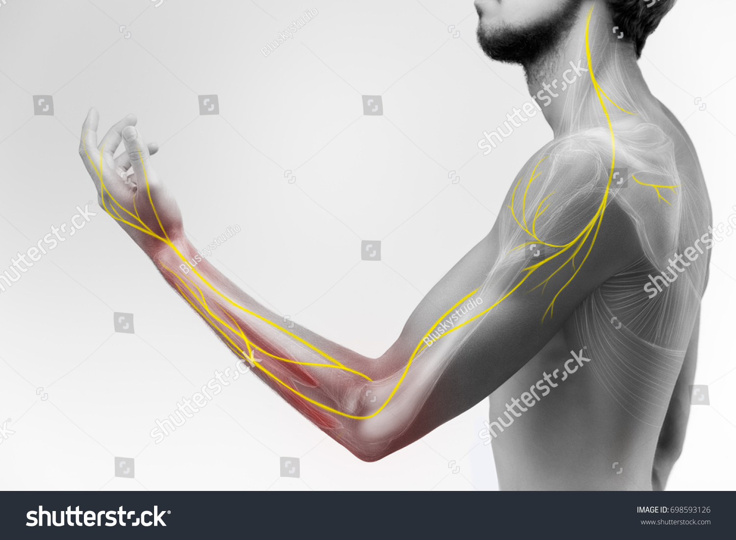 Illustration Human Arm Anatomy Representing Nerves Stock Photo Edit