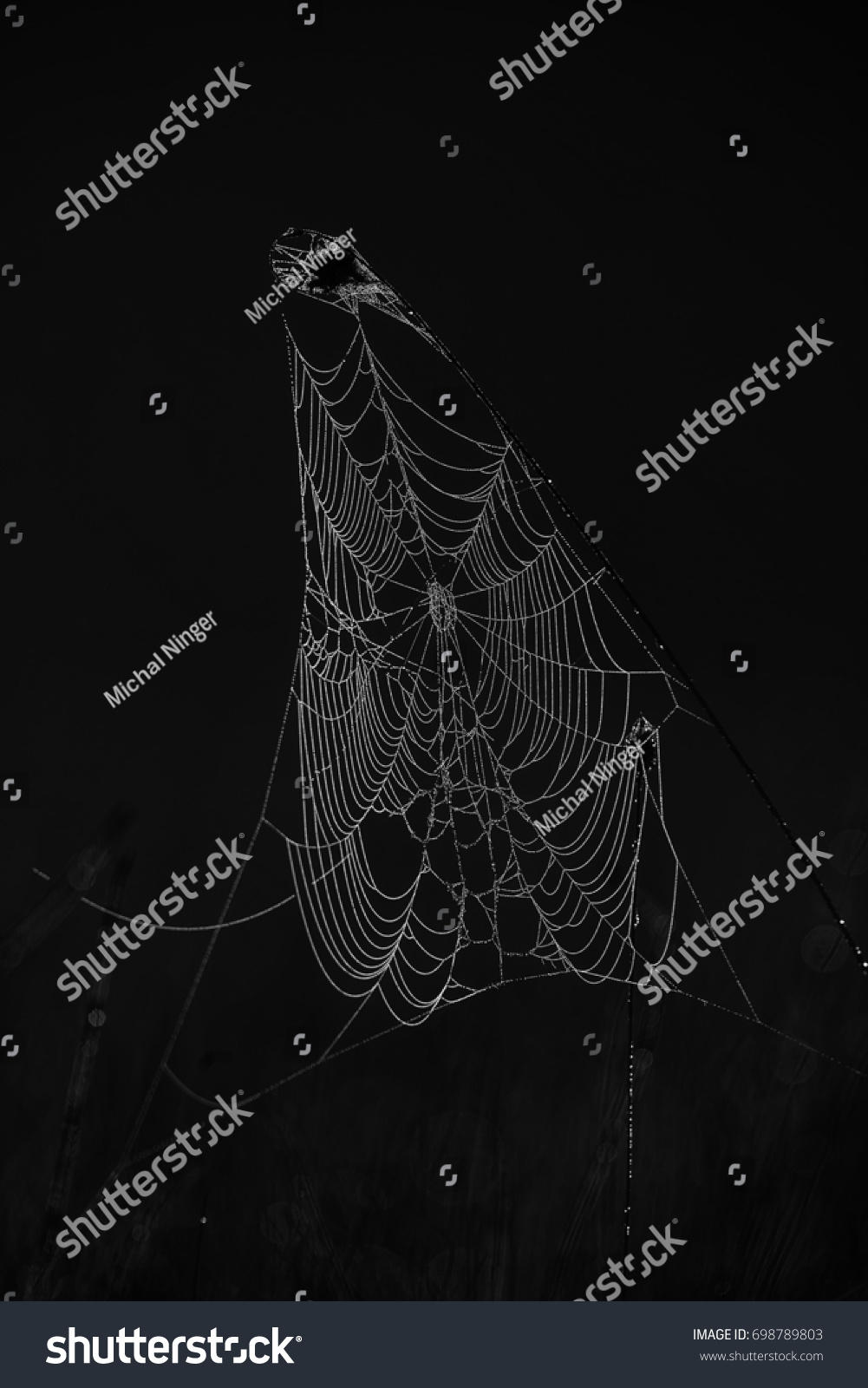 wet spider web black and white with water drops