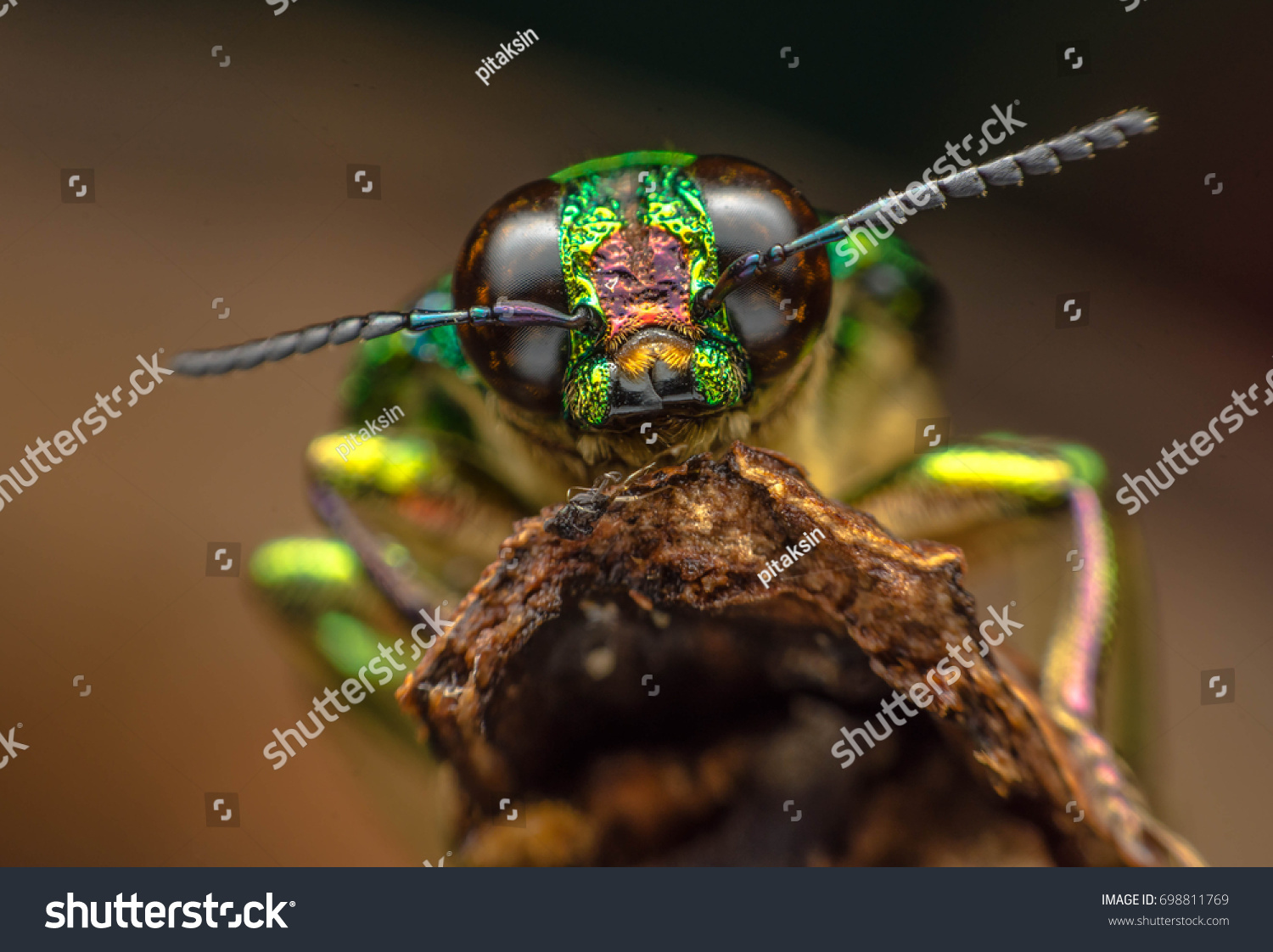 insect  #698811769