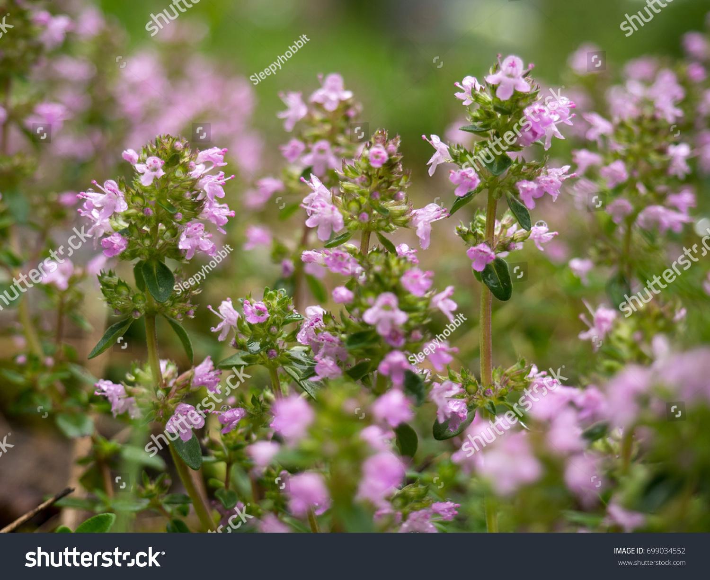 Little Pink Flowers Blooming In The Garden Ez Canvas