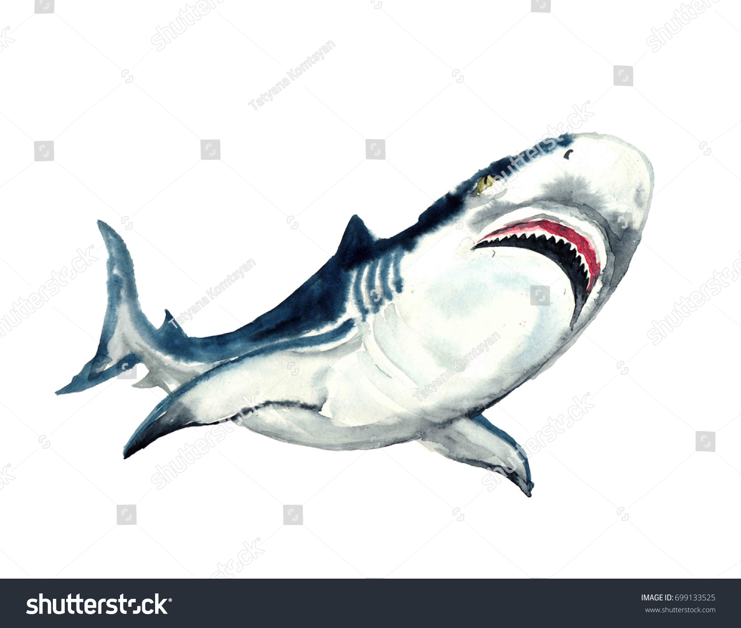 watercolor shark on white background watercolor stock illustration