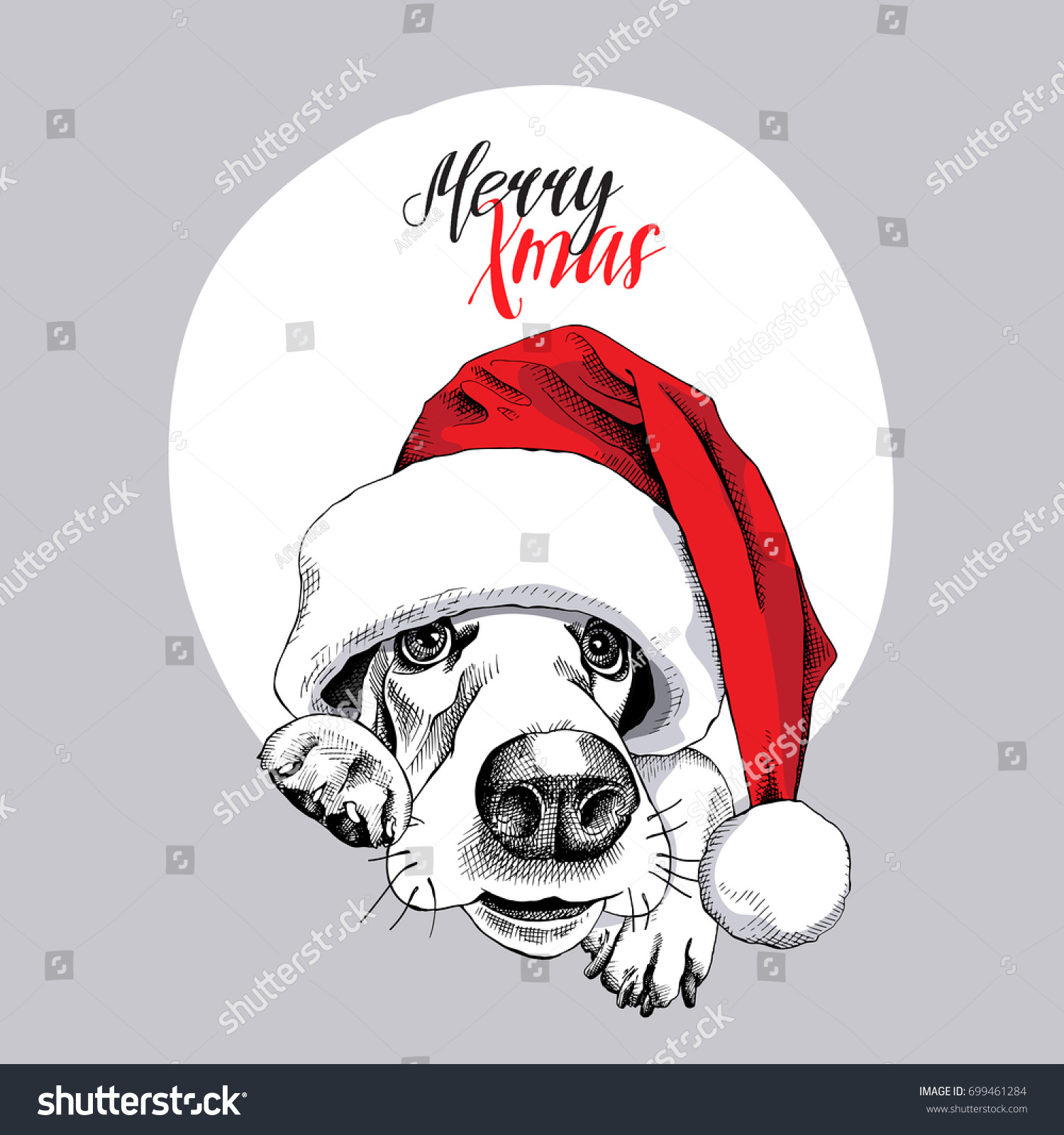 11414b2d02f Christmas card. Portrait of a Basset Hound in a Santa s cap. Vector  illustration.