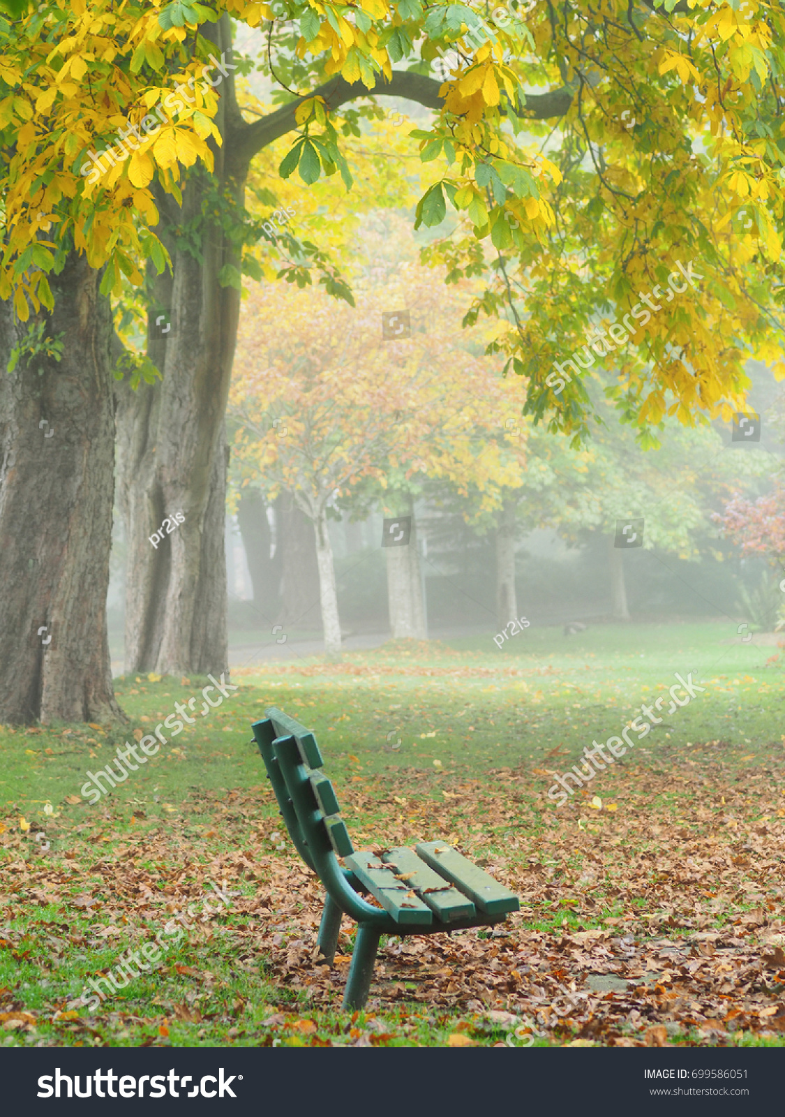 Autumn Colored Bright Leaves On Trees Stock Photo 699586051 ...