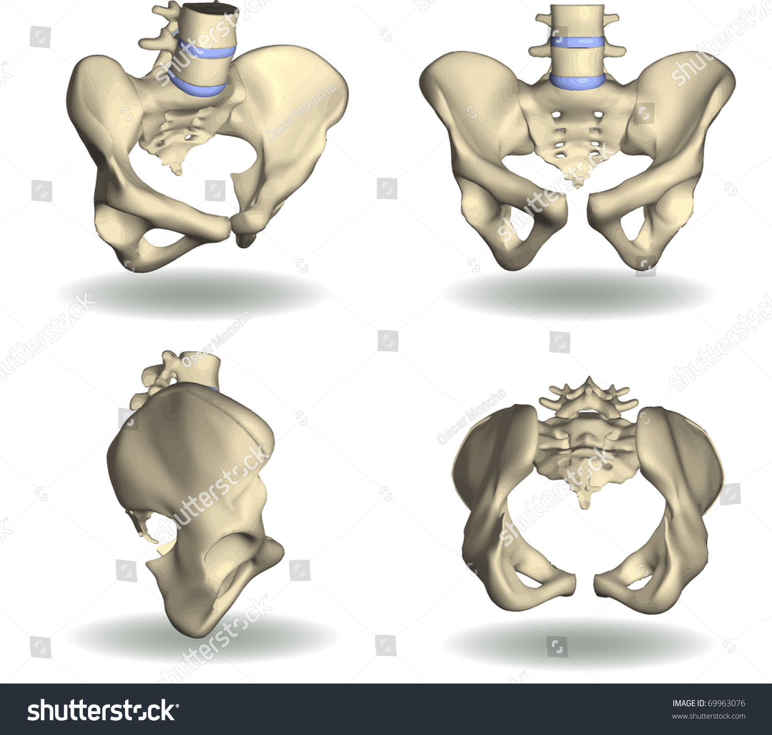 Vector Pelvic Area Four Different Positions Stock Vector (Royalty ...