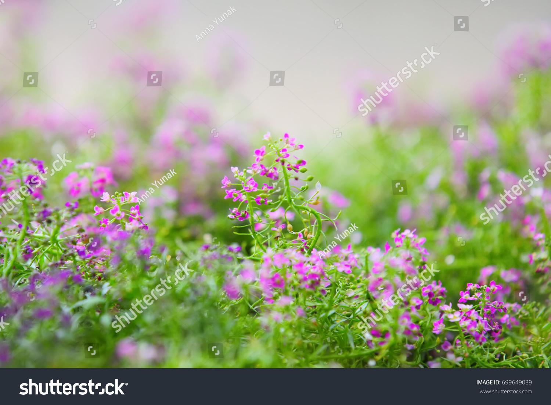 Small Purple Flowers In The Field Ez Canvas