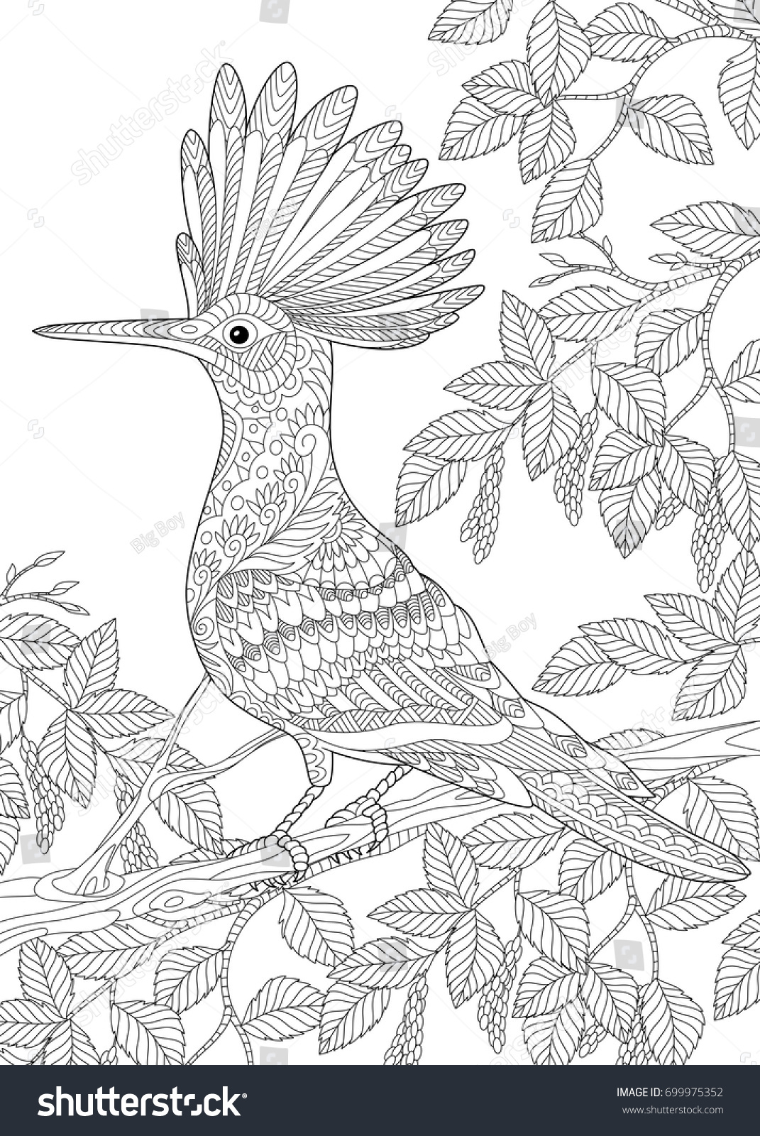 coloring page of hoopoe bird upupa epops sitting on birch tree branch freehand - Birch Tree Branches Coloring Pages