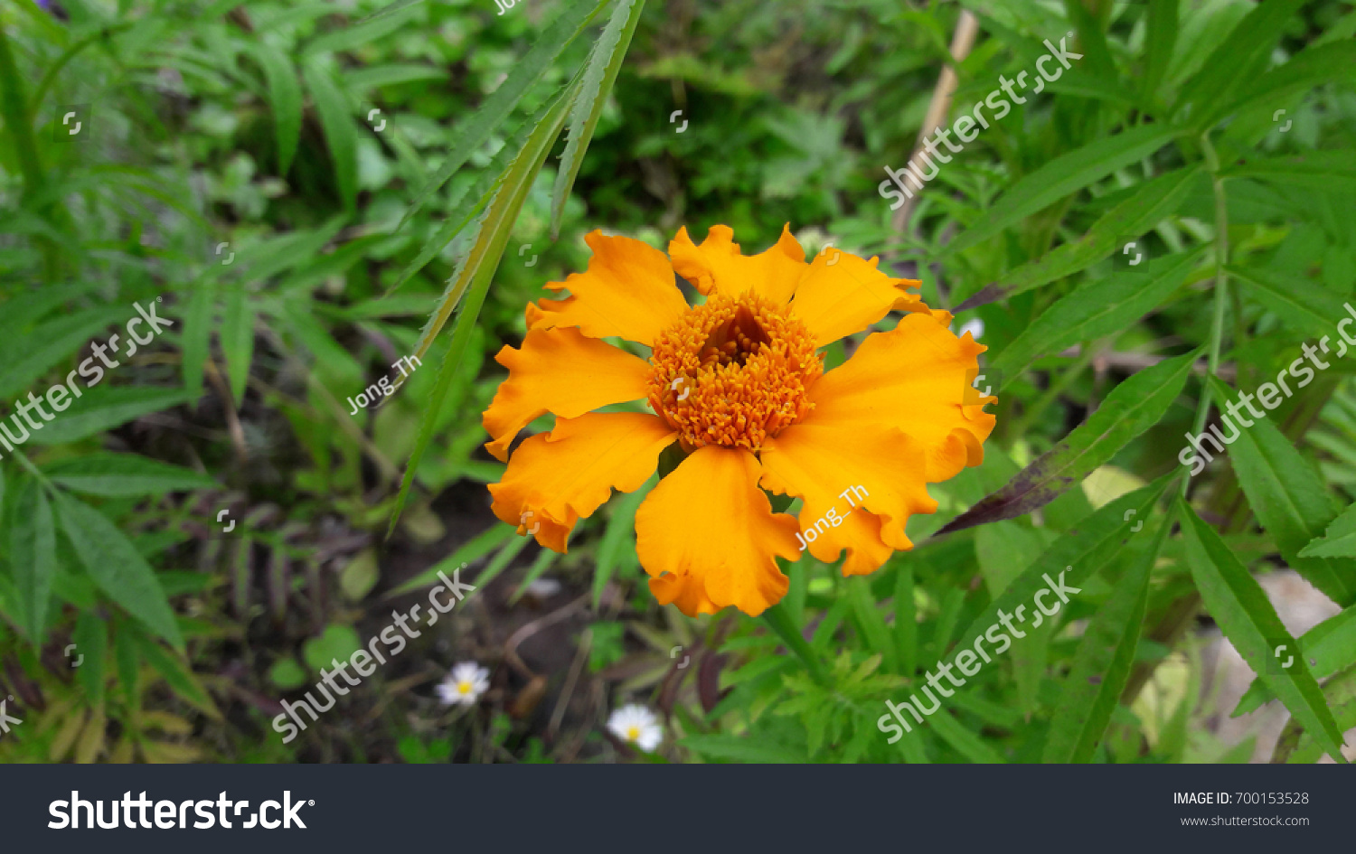 Pretty Yellow Flowers Green Leaves Background Stock Photo Royalty