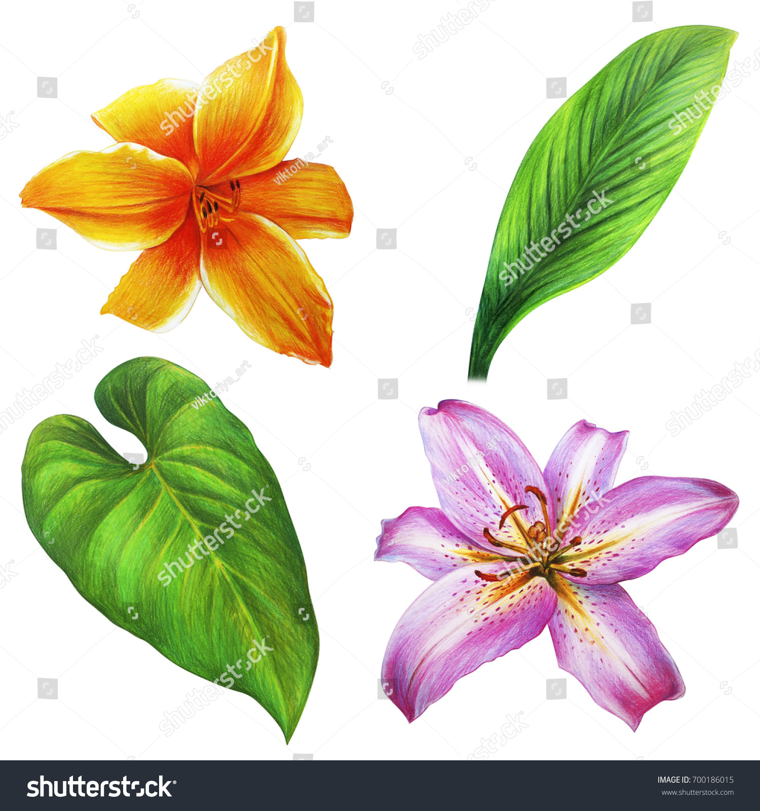 Flowers Leaves Pink Yellow Colors Day Stock Illustration 700186015
