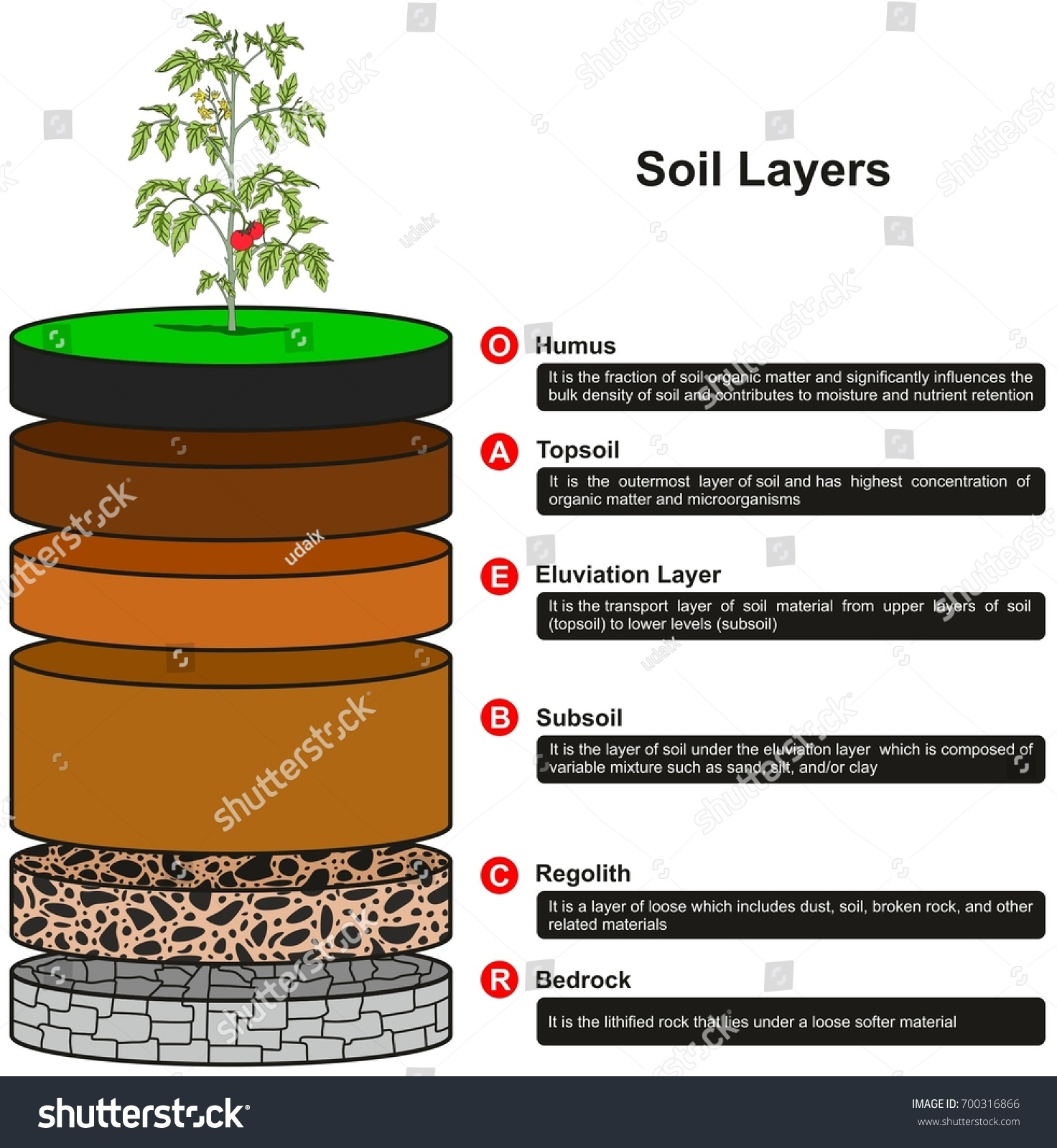Soil layers infographic diagram showing slices stock for Mineral soil definition