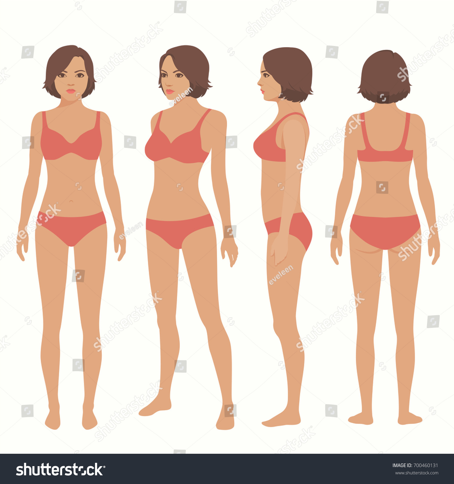 Human Body Anatomy Front Back Side Stock Vector (Royalty Free ...