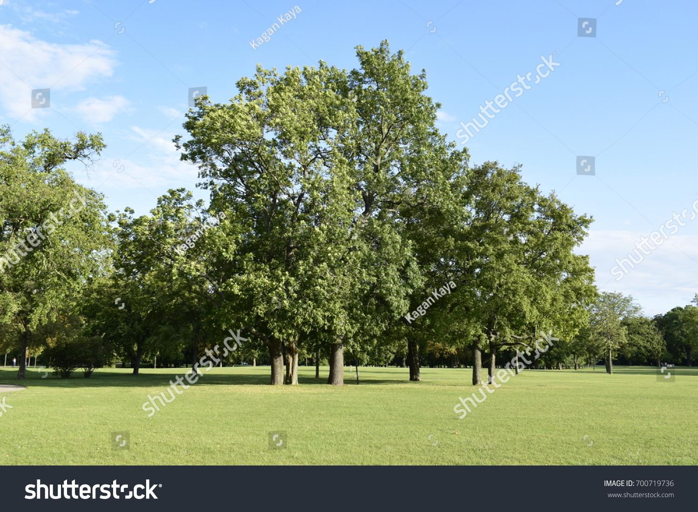 Trees Laxenburg Castle Park Austria Stock Photo Edit Now 700719736