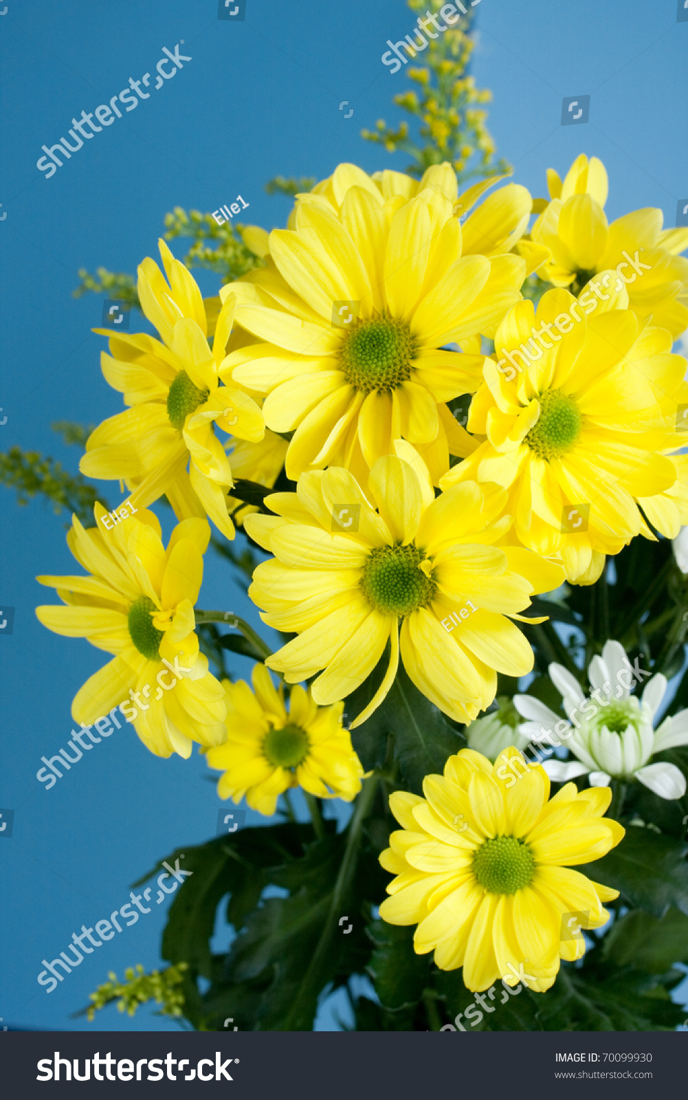 Array Pretty Yellow Flowers Isolated On Stock Photo Royalty Free