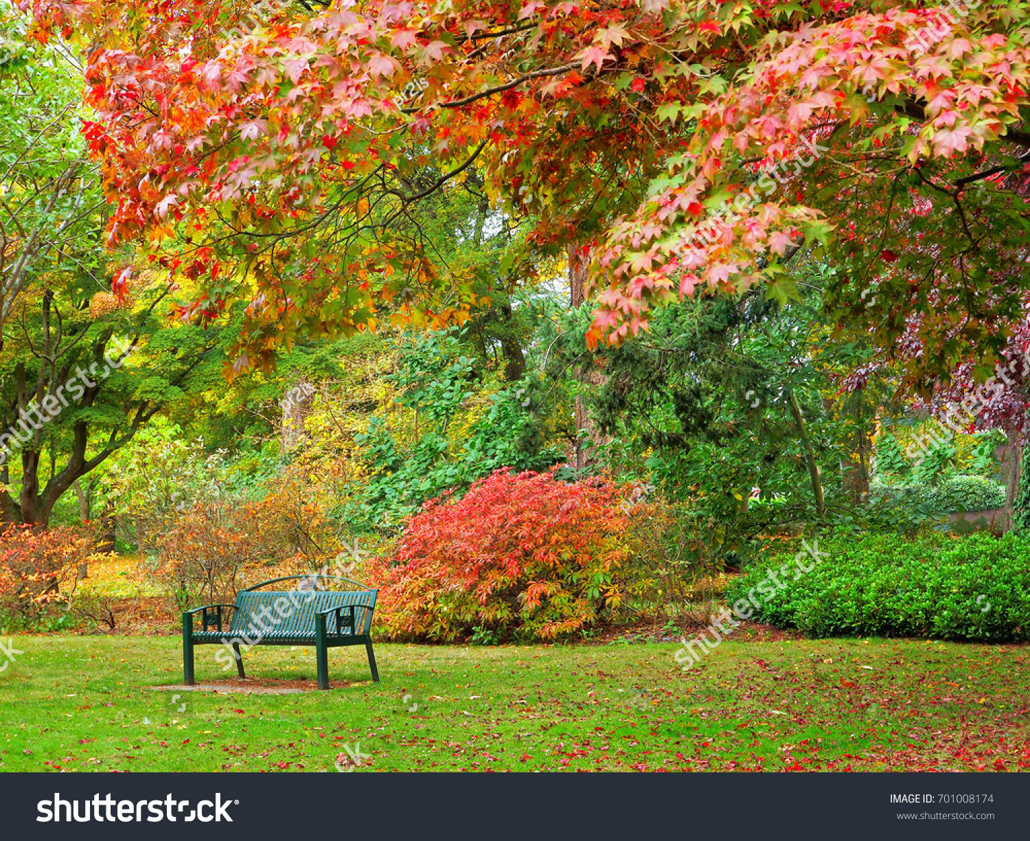 Autumn Colored Bright Leaves On Trees Stock Photo 701008174 ...