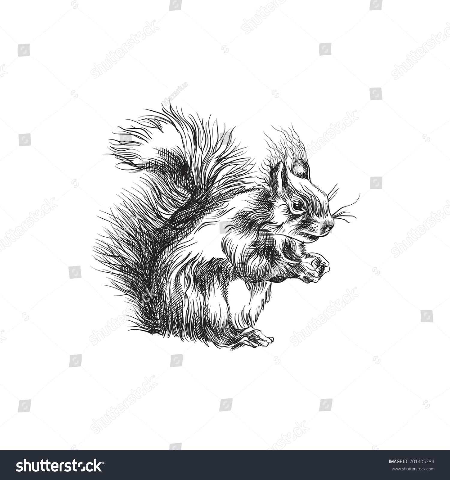 hand drawn squirrel sketch symbol vector stock vector 701405284