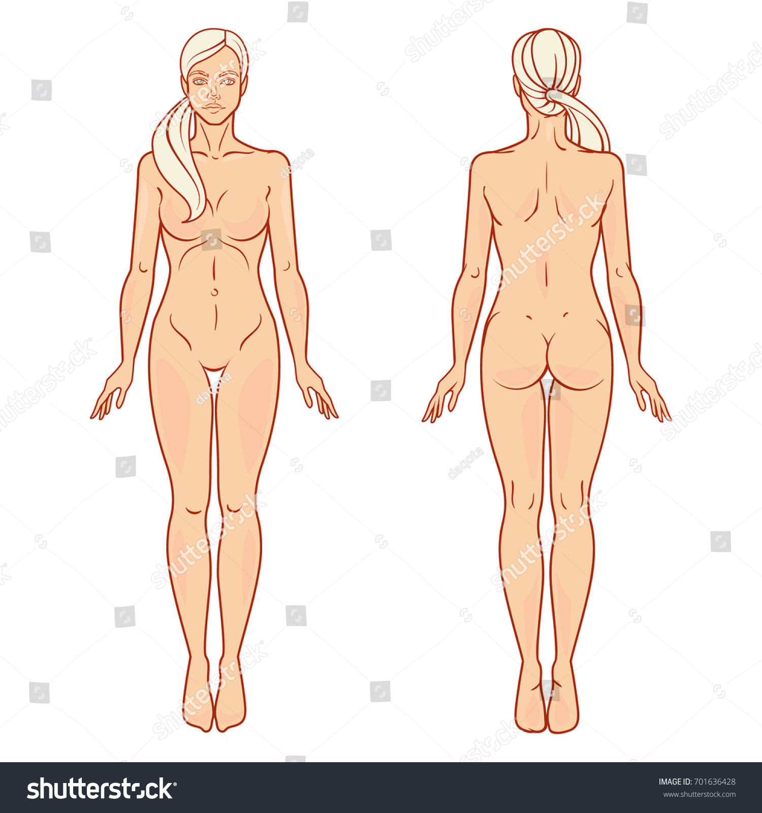 Female Body Front Back View Template Stock Vector Royalty Free
